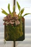 Epiphytic Plant Collection Hanging Wall Art