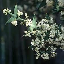 Anchor Plant