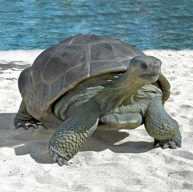 Galapagos  Giant Tortoise Sculpture